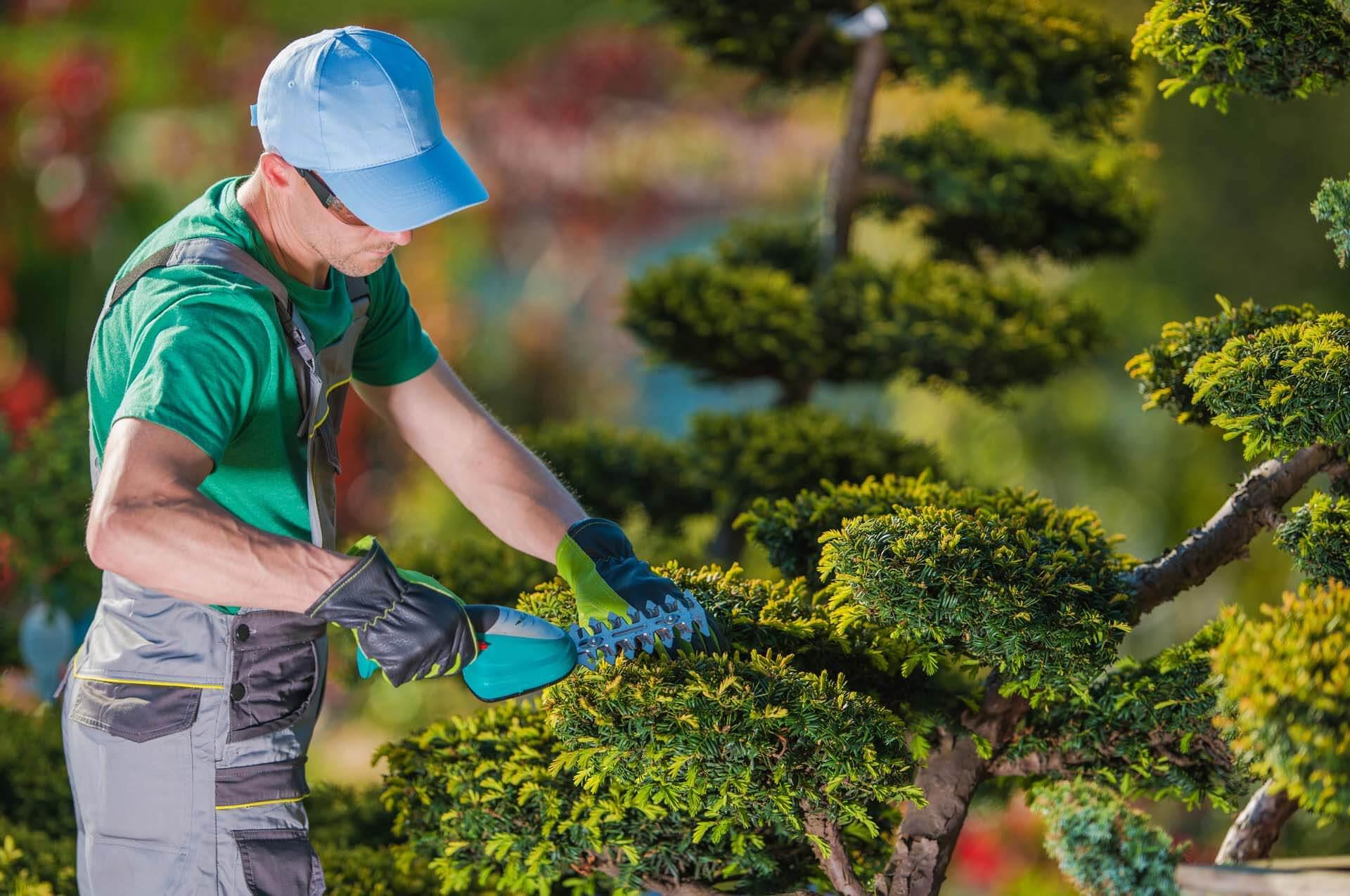 Topiary Gardener Plant Shaper